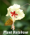 Plant Photography Database